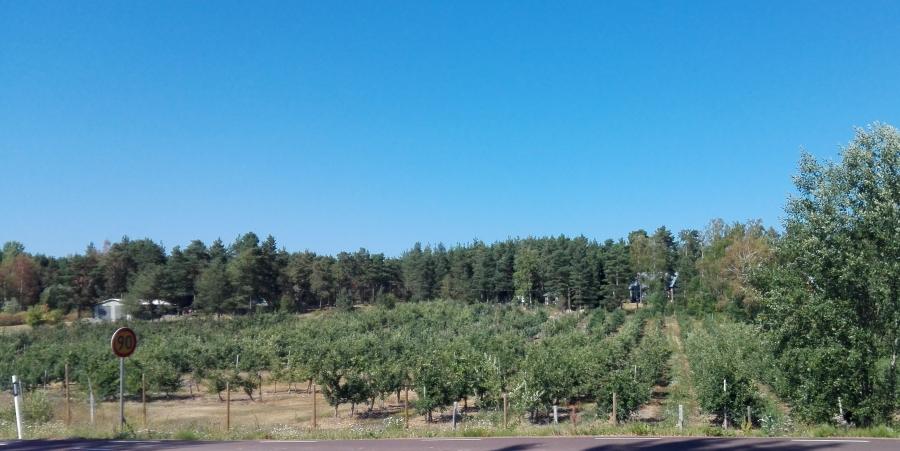 ahvenanmaa omenapuut