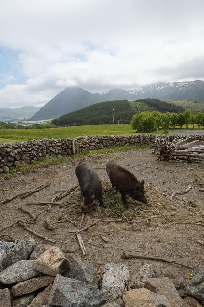 Lofoottien viikinkimuseo